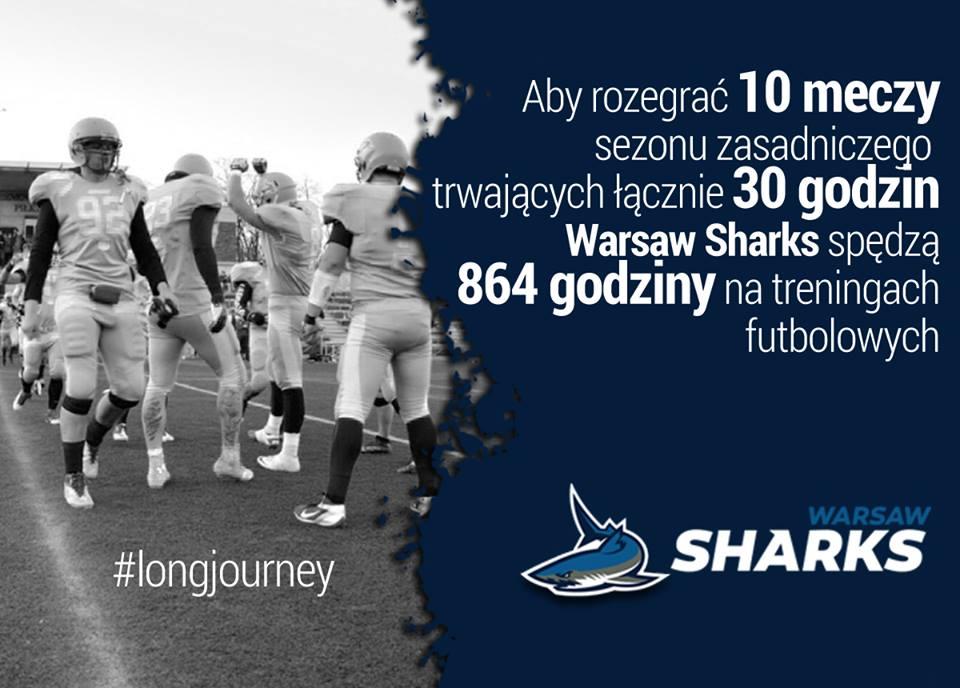 sharks mecze